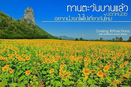 sunflowertrain_1